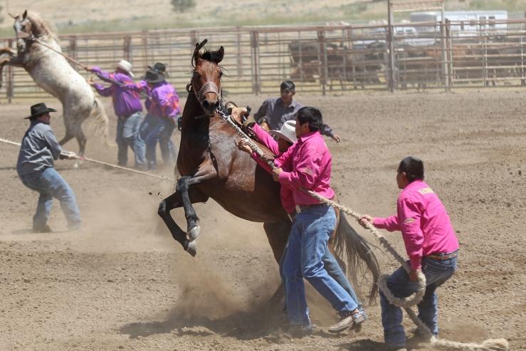 Wild horse race web